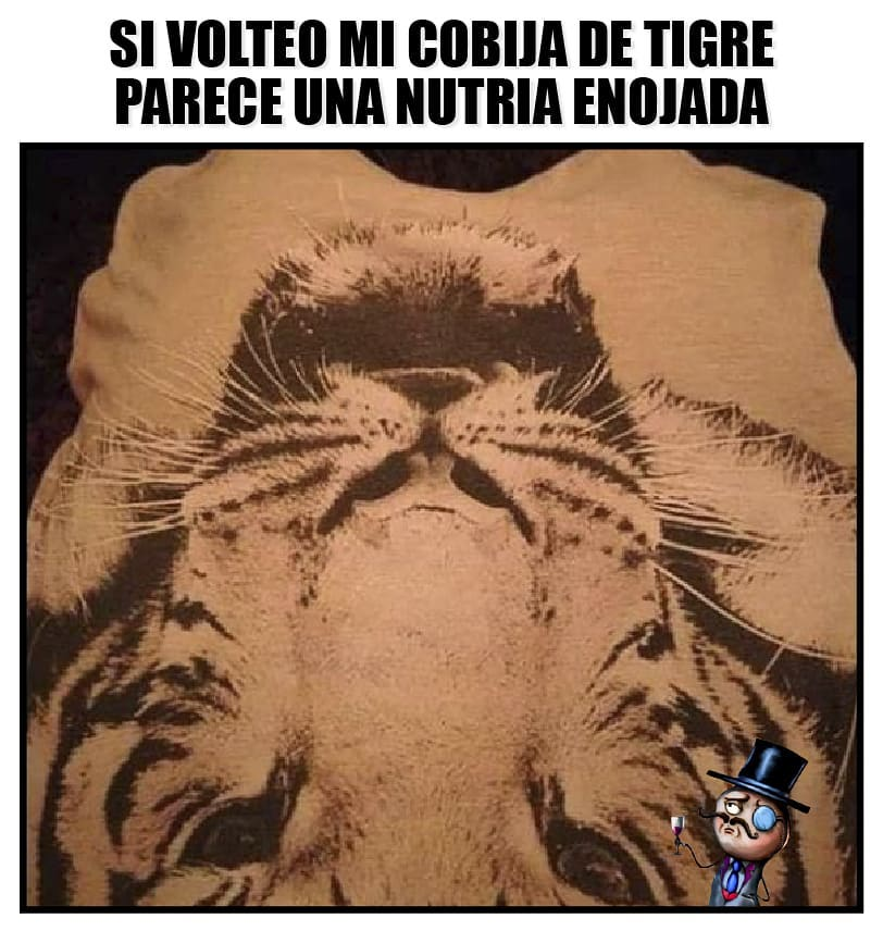 Si volteo mi cobija de tigre parece una nutria enojada.
