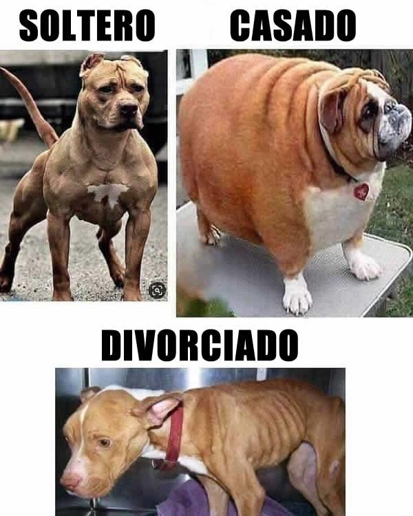 Soltero, Casado, Divorciado.