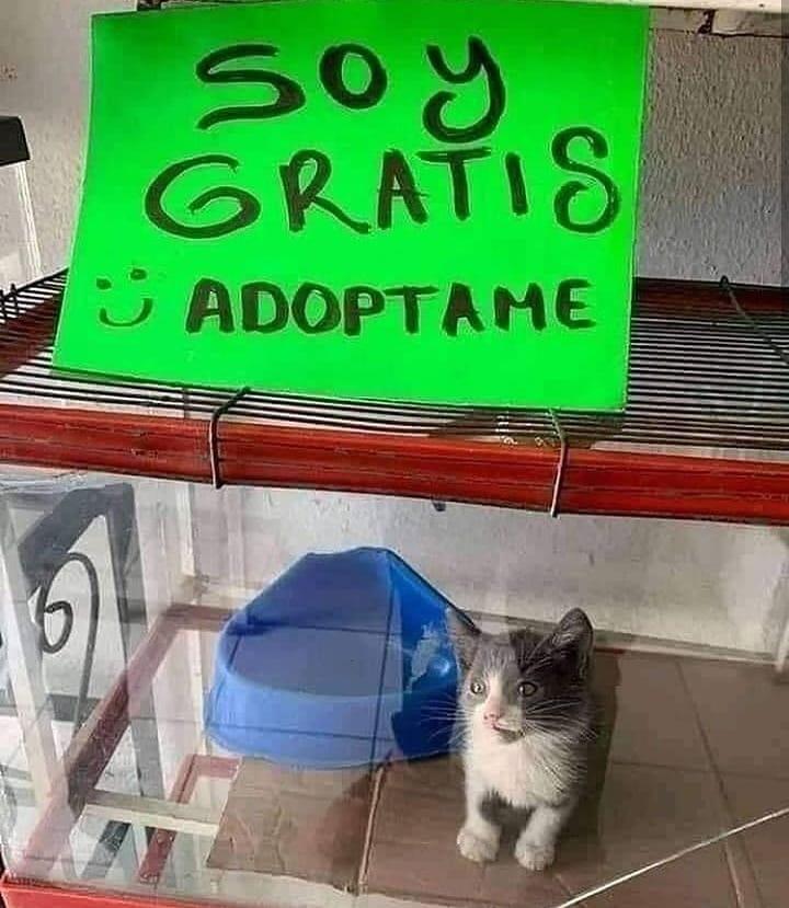 Soy gratis. Adoptame.