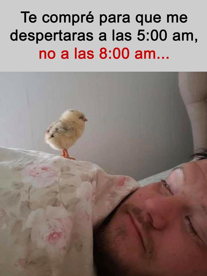 Te compré para que me despertaras a las 5:00 am, no a las 8:00 am...