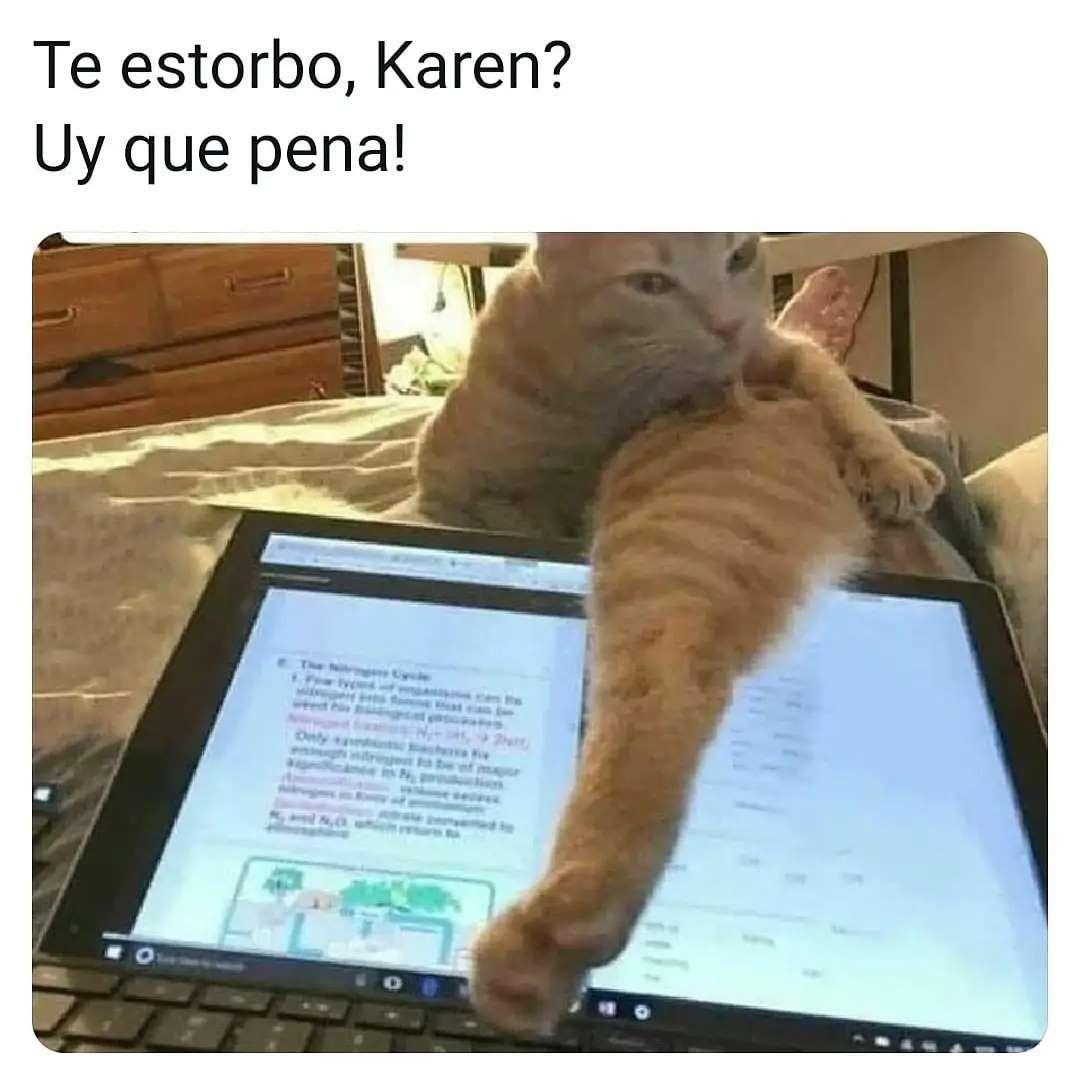 Te estorbo, Karen?  Uy qué pena!