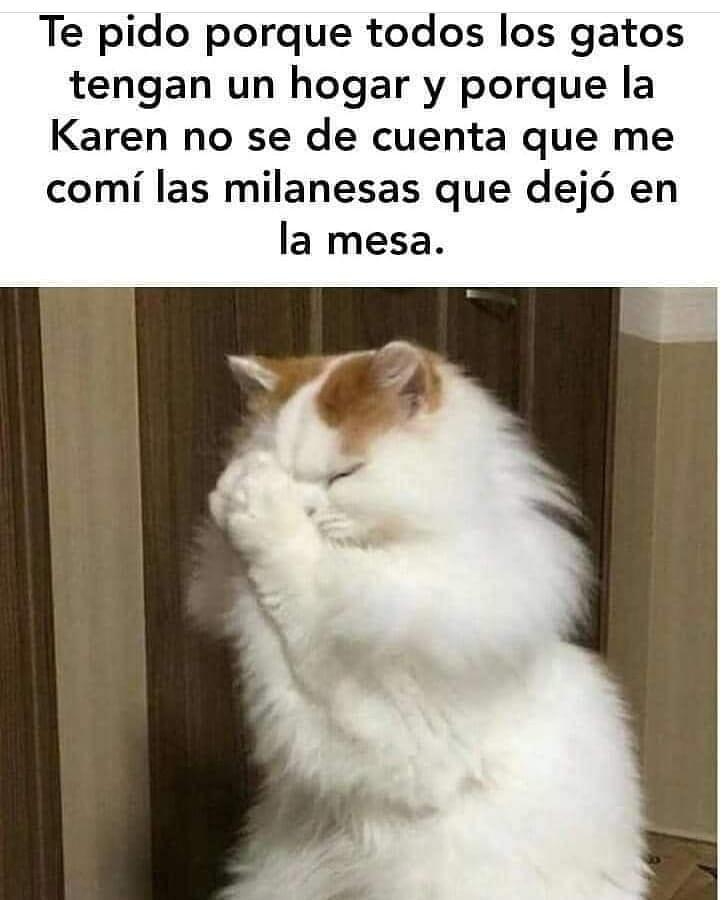 Te pido porque todos los gatos tengan un hogar y porque la Karen no se dé cuenta que me comí las milanesas que dejó en la mesa.