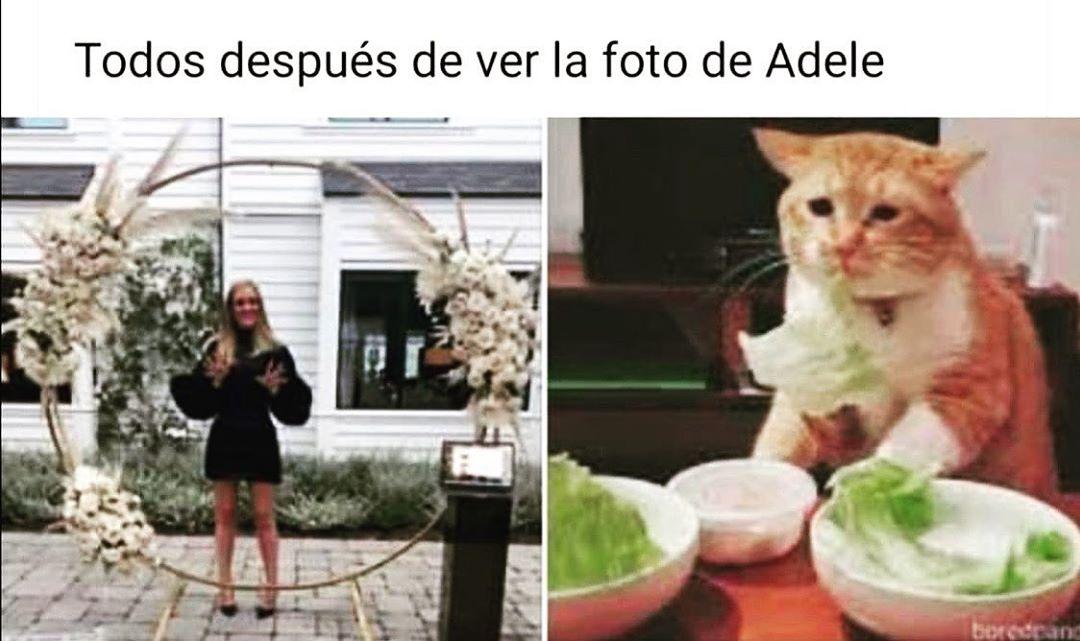 Todos después de ver foto de Adele.