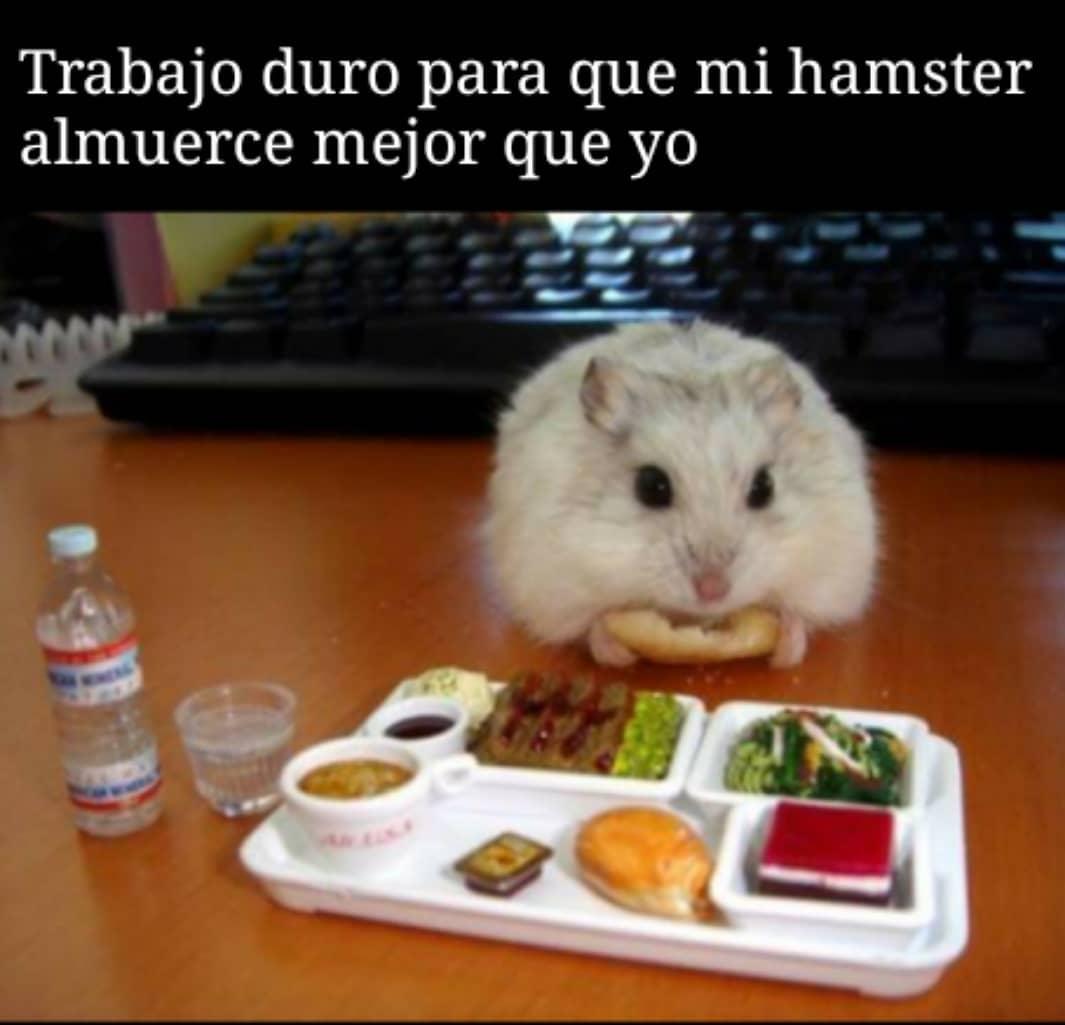 Trabajo duro para que mi hamster almuerce mejor que yo.