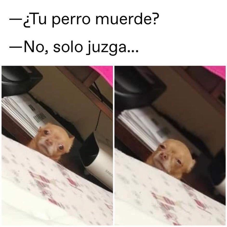¿Tu perro muerde?  No, solo juzga...