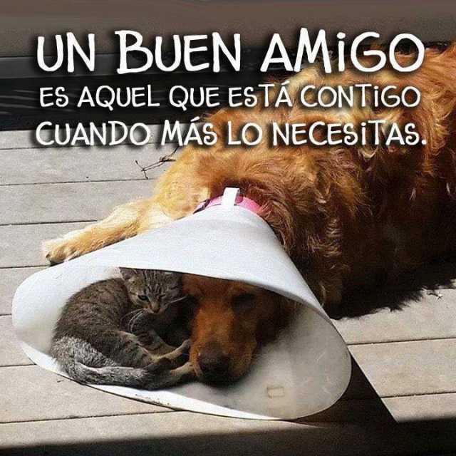 Un buen amigo es aquel que está contigo cuando más lo necesitas.