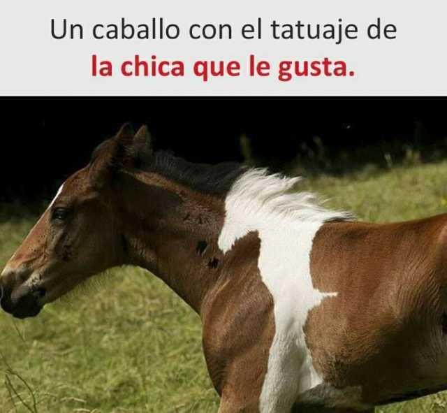 Un caballo con el tatuaje de la chica que le gusta.