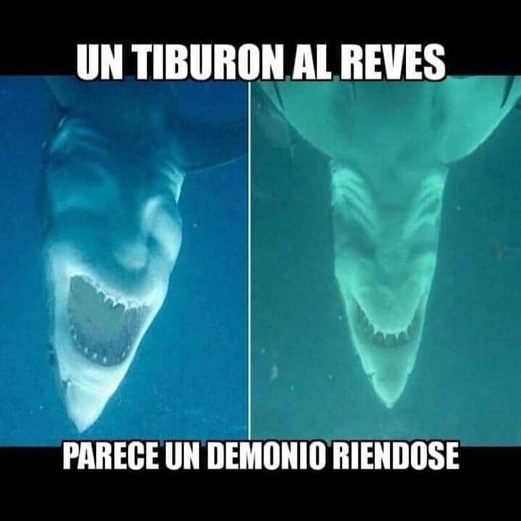 Un tiburón al revés parece un demonio riéndose.