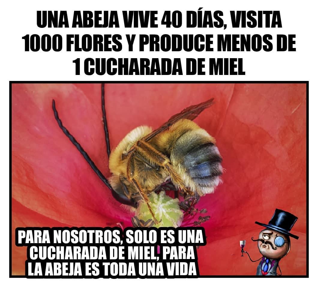 Una abeja vive 40 días, visita 1000 flores y produce menos de 1 cuchara de miel.  Para nosotros solo es una cucharada de miel, para la abeja es toda una vida.