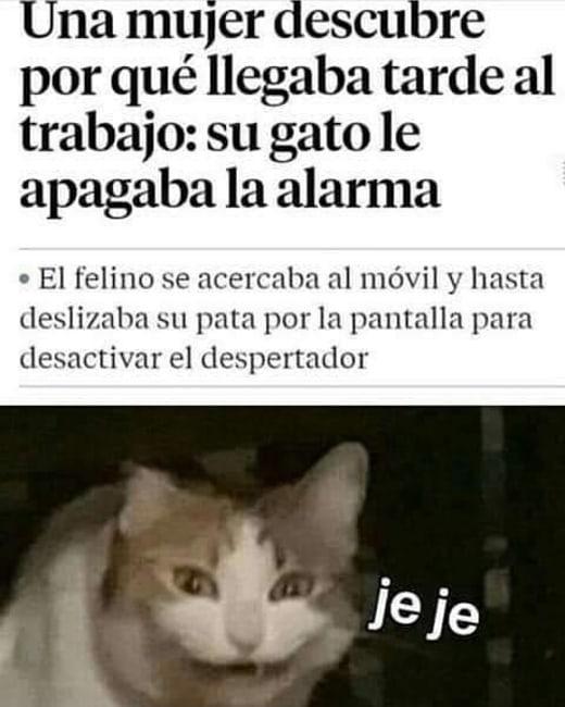 Una mujer descubre por qué llegaba tarde al trabajo: Su gato le apagaba la alarma.  El felino e acercaba al móvil y hasta deslizaba su pata por la pantalla para desactivar el despertador.  Jefe.