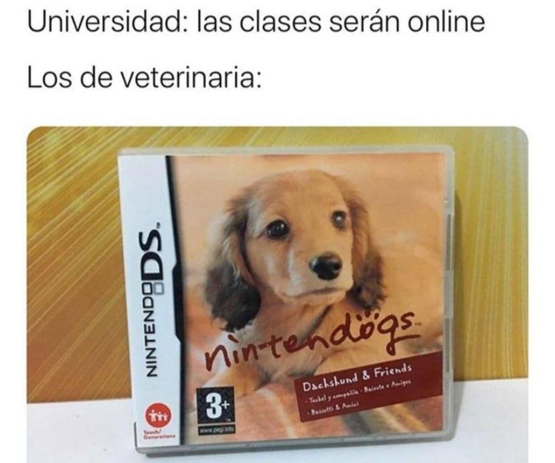 Universidad: las clases serán online.  Los de veterinaria: