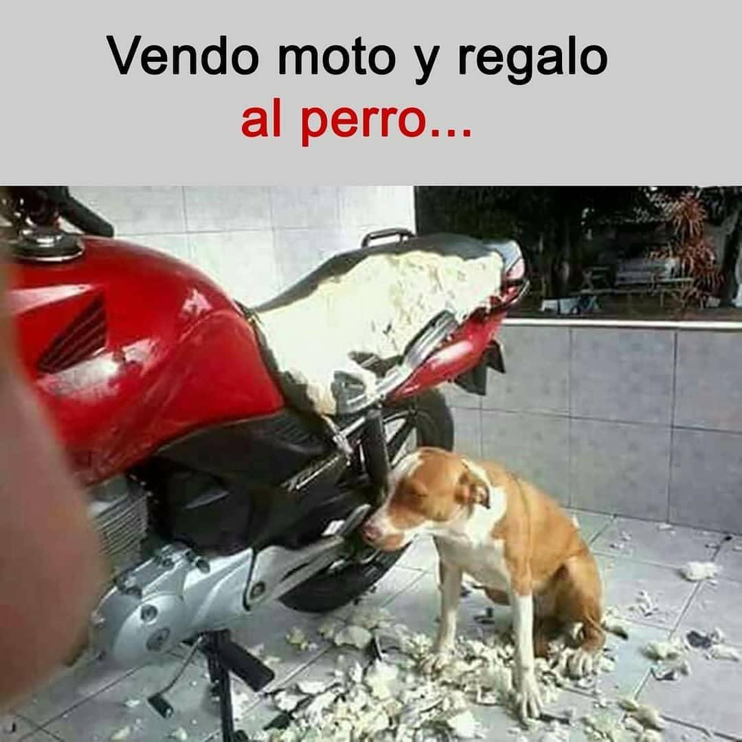 Vendo moto y regalo al perro...