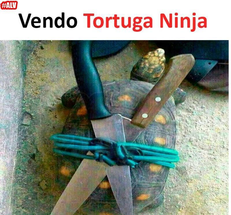 Vendo Tortuga Ninja.