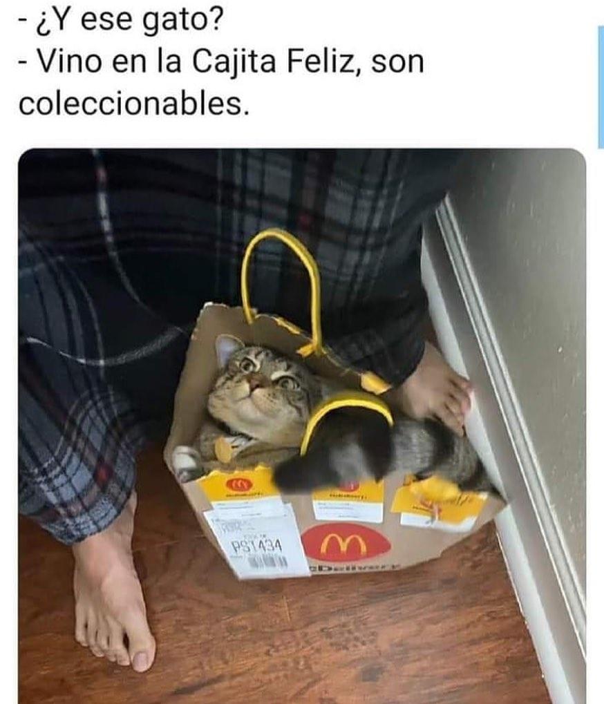 ¿Y ese gato?  Vino en la Cajita Feliz, son coleccionables.
