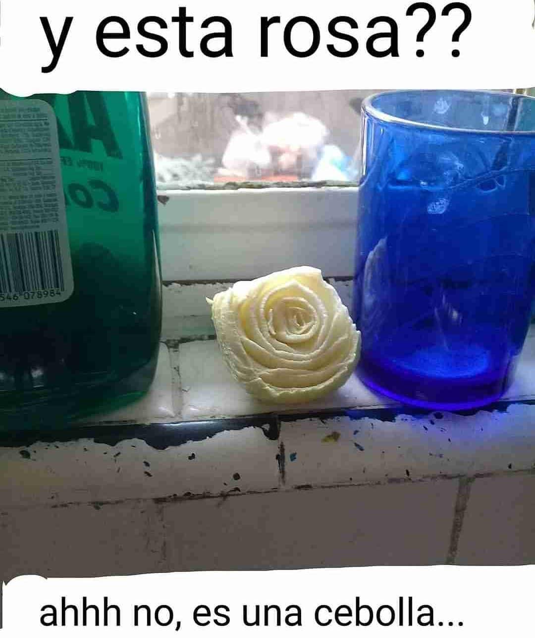 Y esta rosa??  Ahhh no, es una cebolla.
