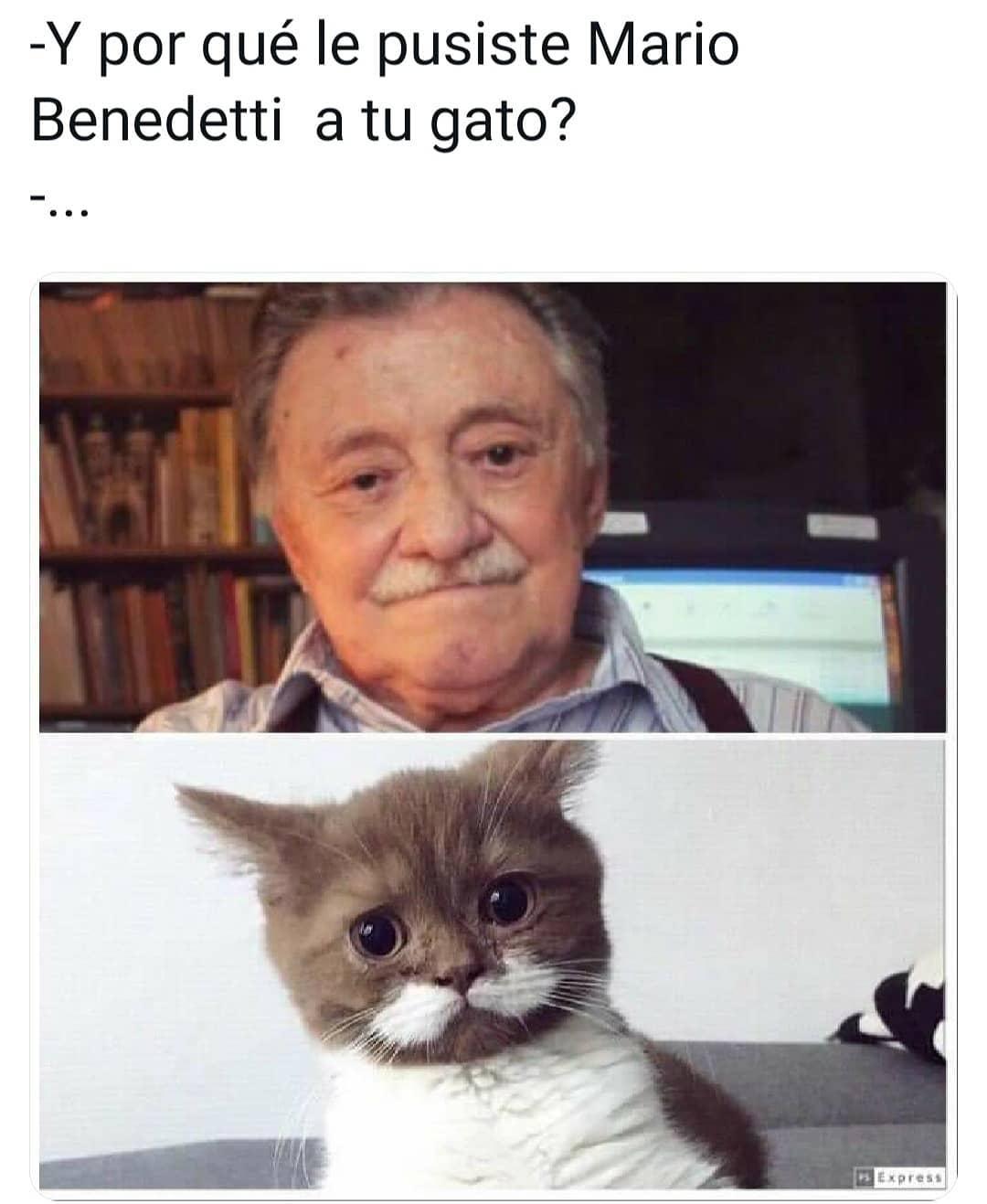 Y por qué le pusiste Mario Benedetti a tu gato?