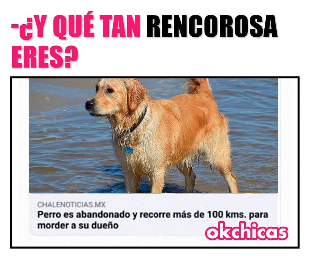 ¿Y qué tan rencorosa eres?  Perro es abandonado y recorre más de 100 kms para morder a su dueño.
