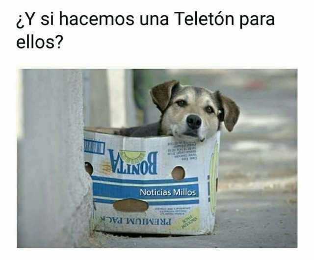 ¿Y si hacemos una Teletón para ellos?