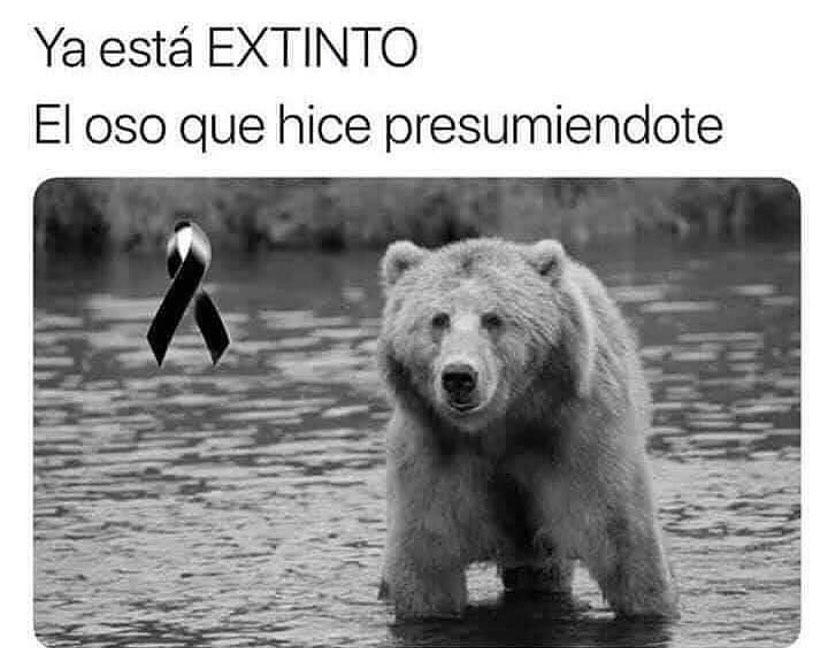 Ya está extinto. El oso que hice presumiéndote.