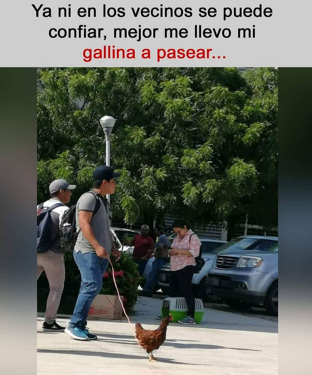 Ya ni en los vecinos se puede confiar, mejor me llevo mi gallina a pasear...