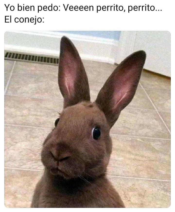 Yo bien pedo: Veeeen perrito, perrito...  El conejo: