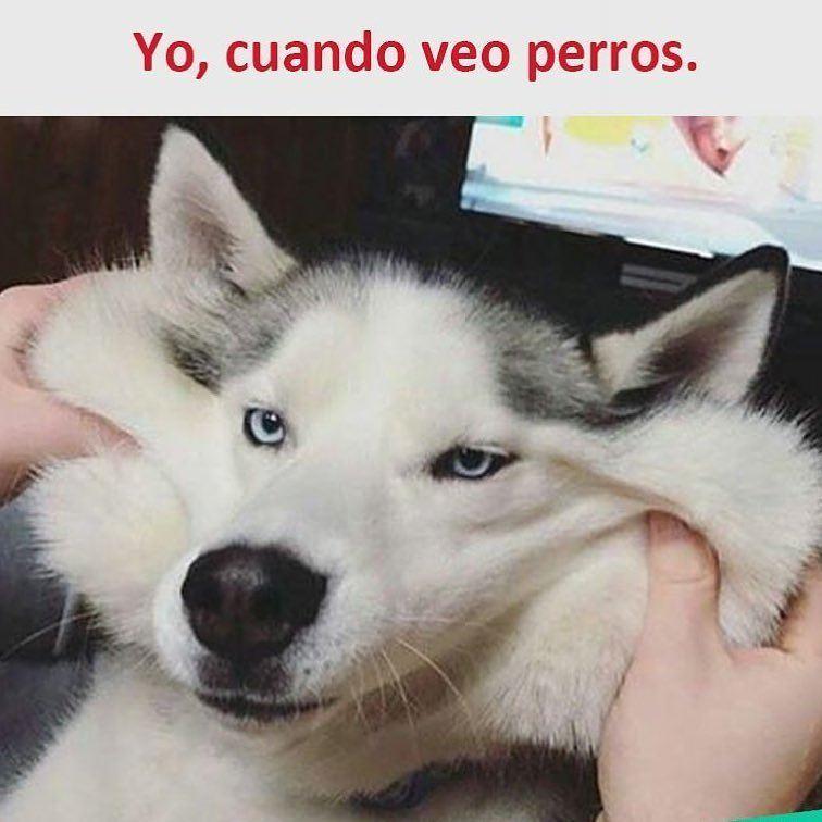 Yo, cuando veo perros.