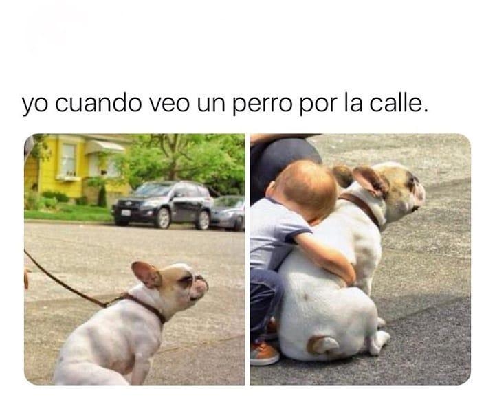 Yo cuando veo un perro por la calle.