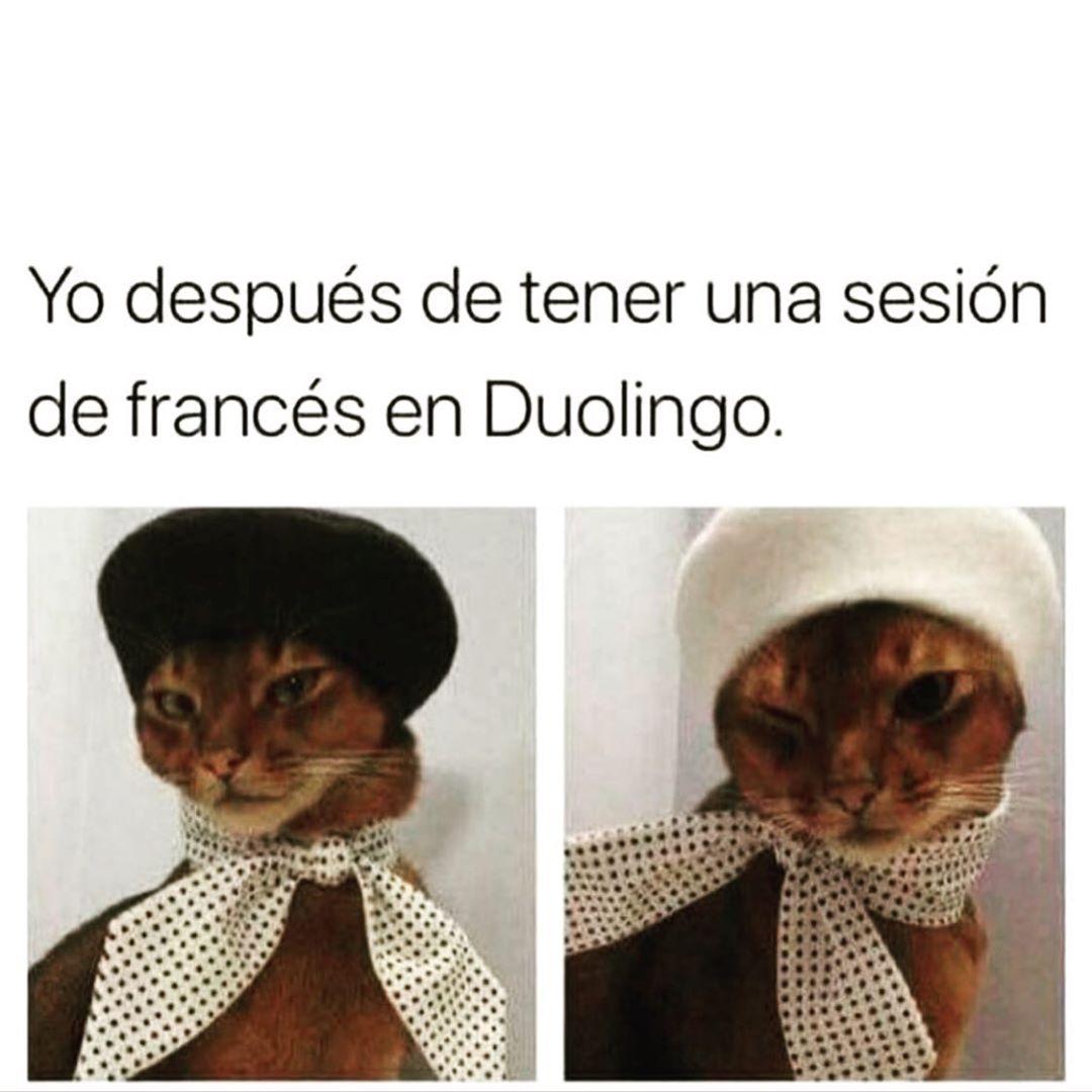Yo después de tener una sesión de francés en Duolingo.