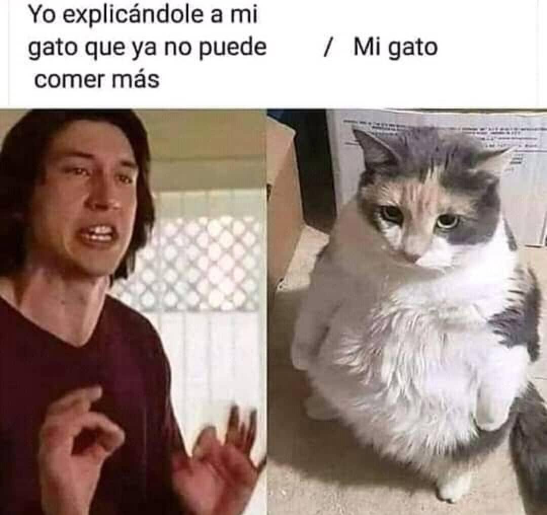 Yo explicándole a mi gato que ya no puede comer más. / Mi gato.