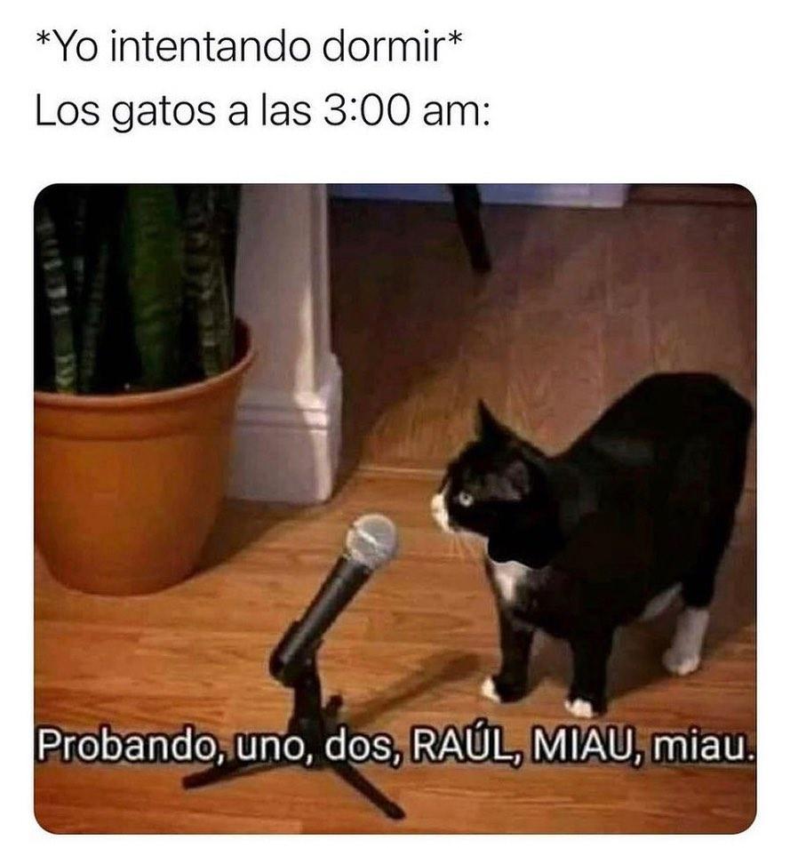 *Yo intentando dormir*  Los gatos a las 3:00 am: Proando, uno, dos Raúl, miau, miau.