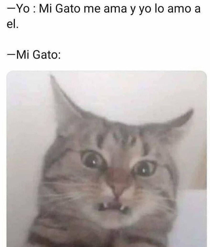 Yo: Mi Gato me ama y yo lo amo a él.  Mi Gato: