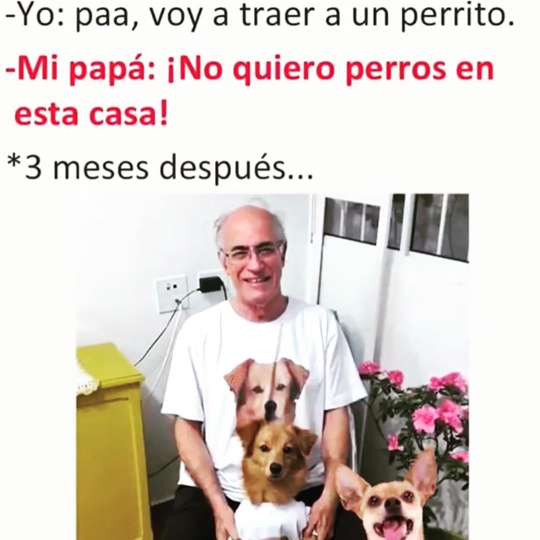Yo: paa, voy a traer a un perrito.  Mi papá: ¡No quiero perros en esta casa!  *3 meses después...