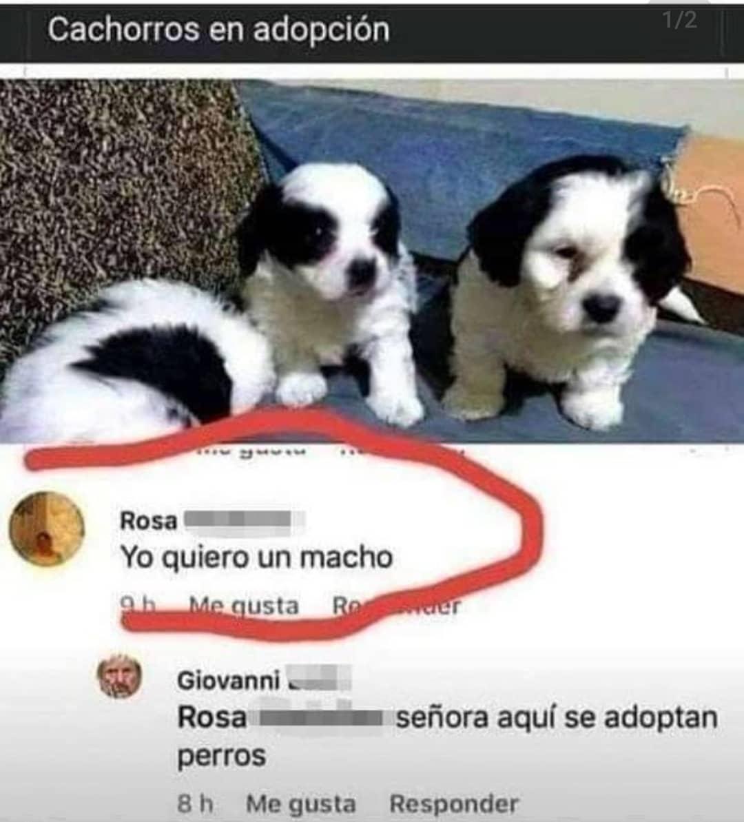 Yo quiero un macho.  Giovanni Rosa señora aquí se adoptan perros.