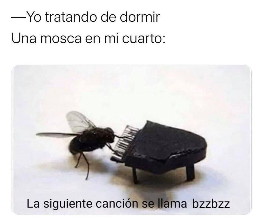 Yo tratando de dormir.  Una mosca en mi cuarto:  La siguiente canción se llama bzzbzz.