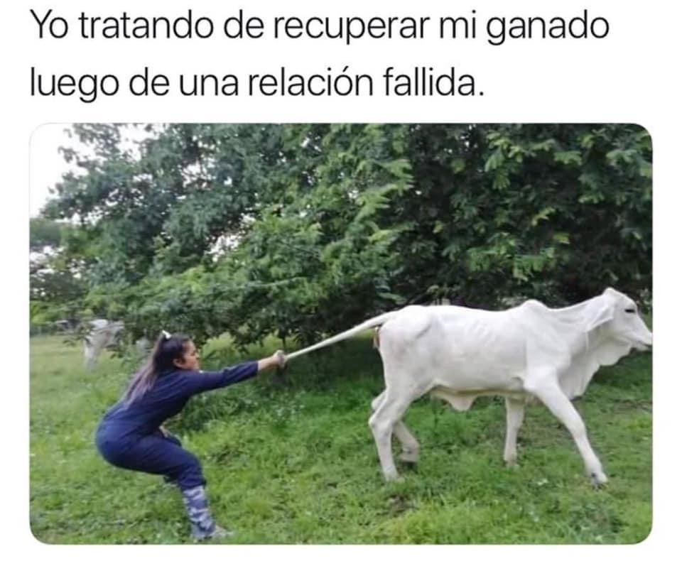 Yo tratando de recuperar mi ganado luego de una relación fallida.