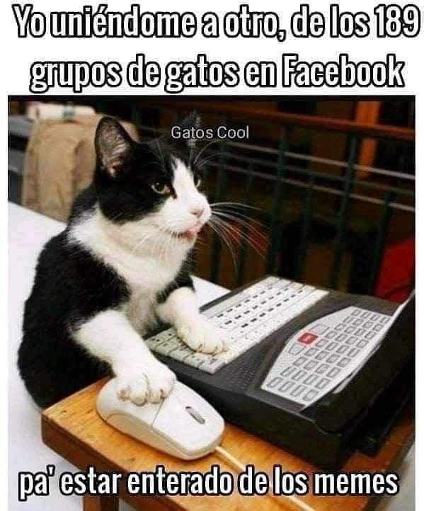 Yo uniéndome a otro, de los 189 grupos de gatos en Facebook. Pa' estar enterado de los memes.