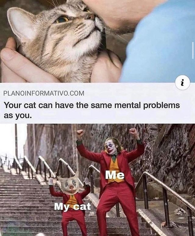 Your cat can have the same mental problems as you. My cat. Me.